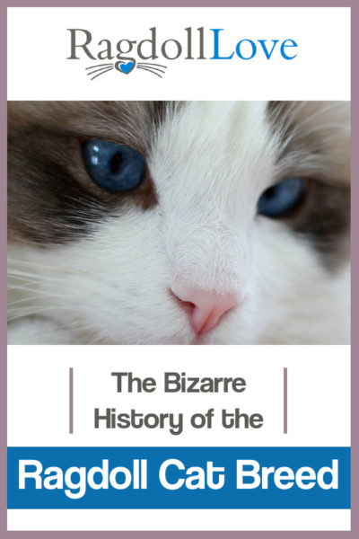 THE BIZZARE HISTORY OF THE RAGDOLL CAT BREED