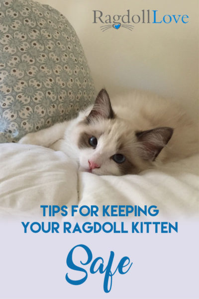 TIPS FOR KEEPING YOUR RAGDOLL KITTEN SAFE