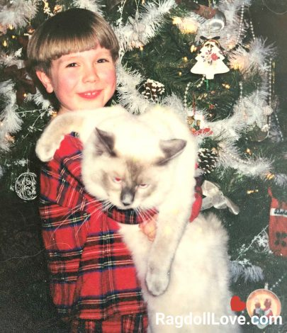 Young Boy with Purebred Ragdoll Cat by Christmas Tree