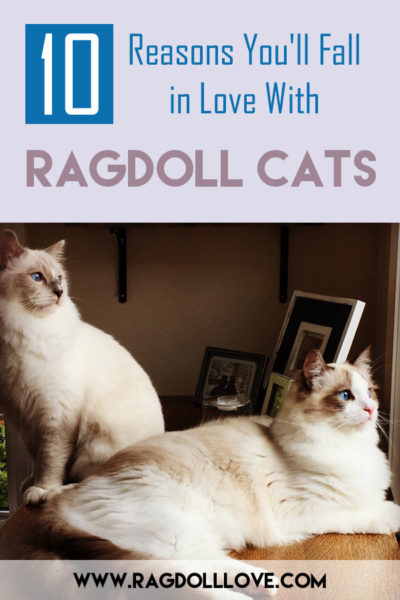 2 Ragdoll Kittens looking out a window, 1 sitting and 1 lying down