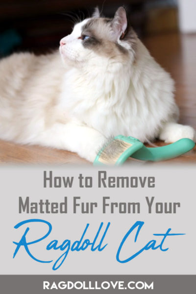 HOW TO REMOVE MATTED FUR FROM YOUR RAGDOLL CAT