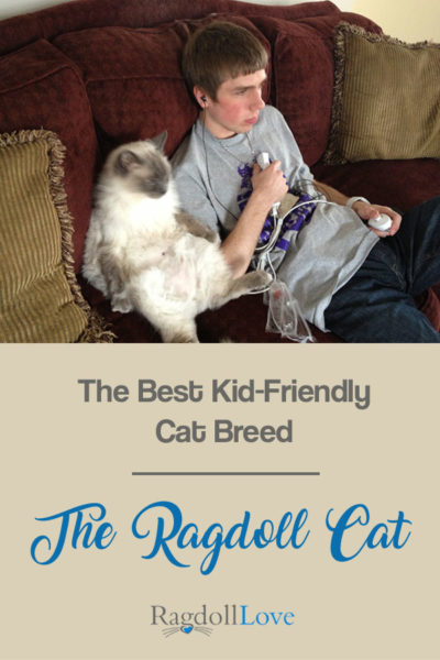 THE BEST KID FRIENDLY CAT BREED THE RAGDOLL CAT - Male Blue point Ragdoll and Teenager Gaming