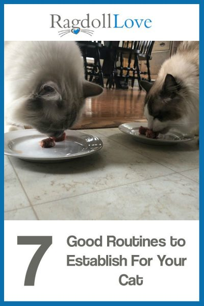 2 Ragdoll cats eating from plates on the floor