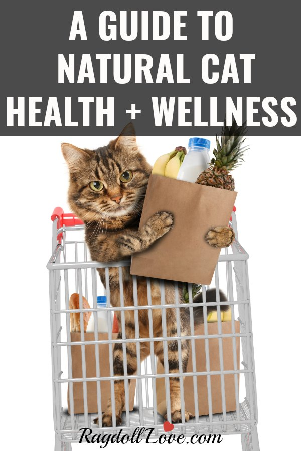 CAT IN A GROCERY CART HOLDING A BAG OF GROCERIES