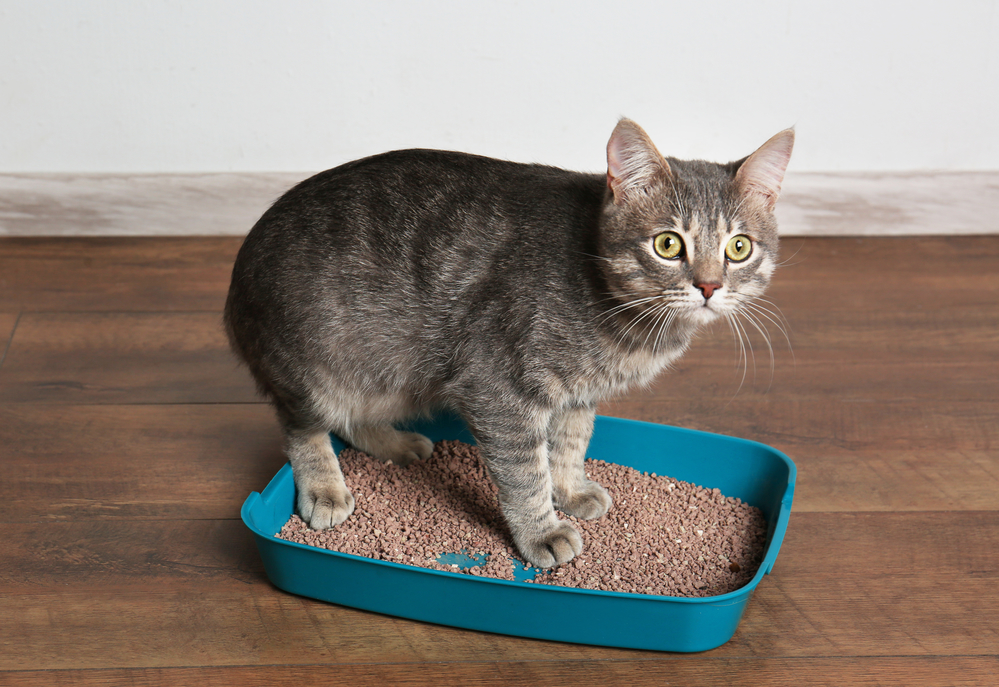Cat in litter box too small