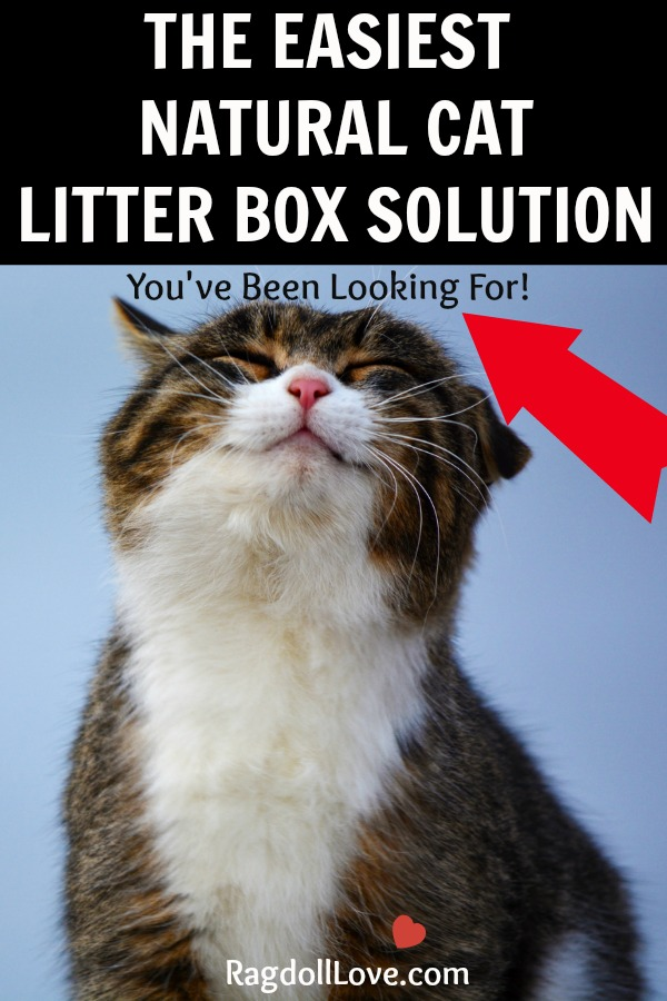 Smiling Cat - The easiest natural cat litter solutions you've been looking for