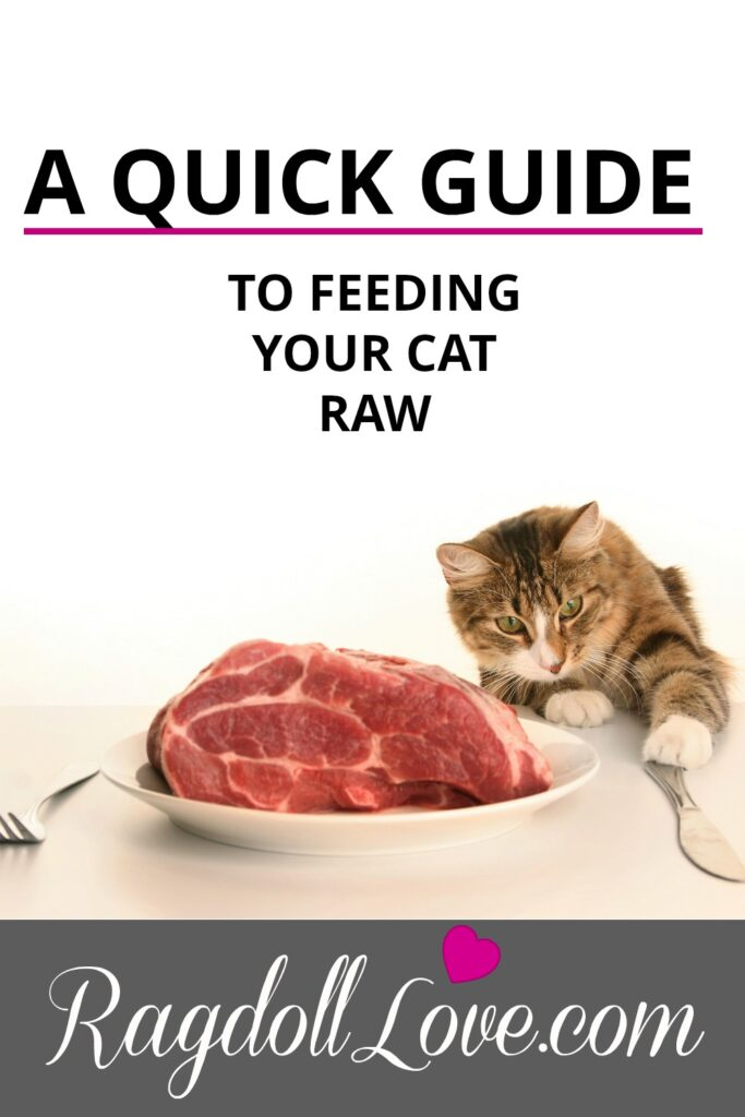 Cat With Knife and Fork and Raw Meat